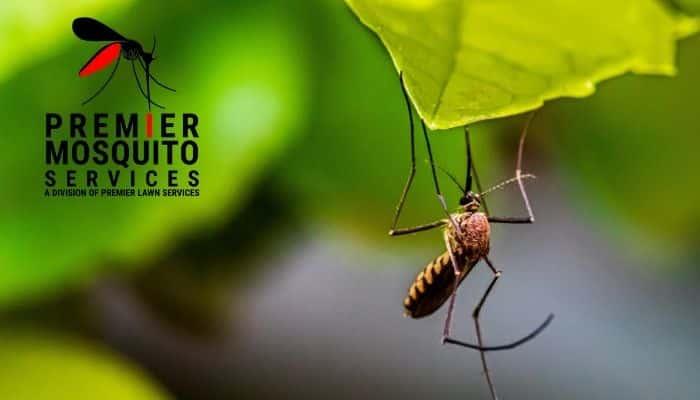 Mosquito control Cicero Swamp